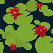 picture of water lily  - Red Lotuses in the pond - JPG