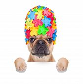 pic of crazy hat  - fawn french bulldog dog ready for summer vacation or holidays behind blank banner or placard isolated on white background - JPG