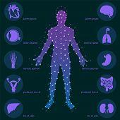 picture of human internal organ  - Medical background - JPG
