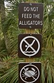 picture of alligator  - A public sign in the Florida Everglades instructs visitors to Not Feed the Alligators - JPG