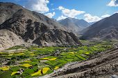 picture of jammu kashmir  - Aerial view of green and yellow field in valley of Ladakh Jammu and Kashmir state India - JPG