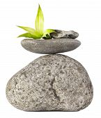 picture of flower arrangement  - Balanced Stones and Bamboo Flower on White Background - JPG