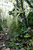 Cross In Overgrown Grave Yard