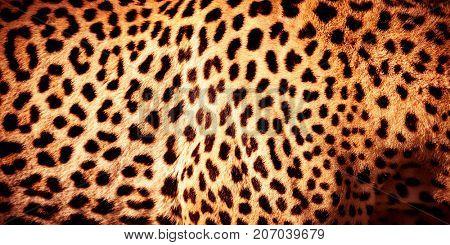 Beautiful leopard skin background natural