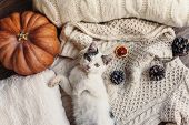 Cute kitten relaxing on warm sweater by autumn rustic home decor. Lazy cat resting on soft pullover. poster