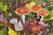 Постер, плакат: Осенний фон грибы ягоды и листья