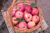 Basket Of Ripe Apples poster