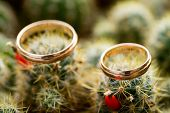 Pair Male And Female Wedding Gold Rings On Fresh Green Cactus Mammillaria With Orange Fruits. Love,  poster