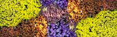 White Yellow Lilac Orange Flower In Garden. Flower At Sunny Summer Or Spring Day. Flower For Postcar poster