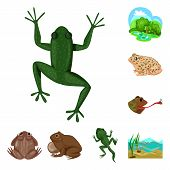 Vector Design Of Frog And Anuran Logo. Collection Of Frog And Animal Vector Icon For Stock. poster