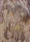 Tree Bark Yellow Taupe2 poster