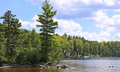 picture of moosehead  - Tree lined shore of Moosehead Lake - JPG