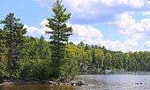 picture of moosehead  - Tree lined shore of Moosehead Lake - JPG