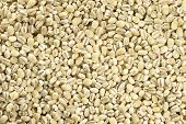 pic of millet  - Millet Background  - JPG