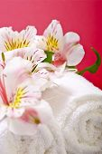 stock photo of pinky  - Flowers and Towels  - JPG