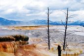 stock photo of mammoth  - Yellowstone Landscape - JPG