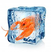 picture of crawfish  - Crawfish in ice cube isolated on a white background - JPG
