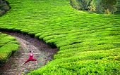 stock photo of virabhadrasana  - Yoga virabhadrasana II warrior pose by woman in red cloth on tea plantations in Munnar hills Kerala India - JPG