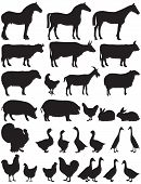 image of cockerels  - Vector illustration of silhouettes of various farm animals - JPG
