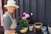 image of senior adult  - Active senior woman potting some plants in terracotta pots on a counter in backyard - JPG