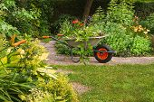 pic of wheelbarrow  - Cleaning the garden - Wheelbarrow with garden-waste in blooming summergarden