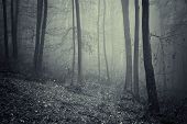 Dark spooky scenery on forest with fog on halloween