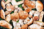 picture of porcini  - Closeup bunch of Porcini mushrooms at the market in Italy - JPG