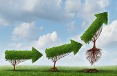 pic of lifting-off  - Business launch success symbol as a group of trees shaped as an arrow gradually maturing lifting off upward as a metaphor for soaring profits and the opportunity or potential of strong investment growth - JPG
