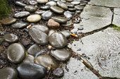 picture of nasty  - Pebble path in a garden - JPG