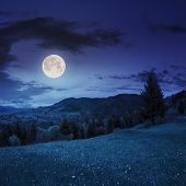 image of coniferous forest  - meadow of mountain range with coniferous forest and village at night in full moon light - JPG