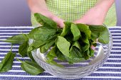 image of sorrel  - Woman holding tuft of sorrel in glass basin - JPG
