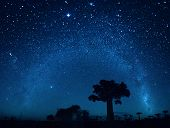 stock photo of baobab  - Starry sky and baobab trees - JPG