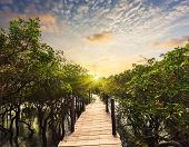picture of jungle exotic  - Tropical exotic travel concept  - JPG
