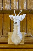 stock photo of black tail deer  - Deer head nailed to the wall at home and plastered with snow on one side - JPG