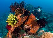 picture of watersports  - Female SCUBA diver behind a colorful coral outcrop