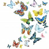 picture of butterfly  - Beautiful vector image with nice watercolor butterflies - JPG