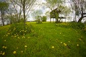 image of unique landscape  - landscape of rural dandelion meadow with tree house fisheye lens distortion - JPG