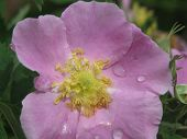 picture of raindrops  - flower with raindrops at IAMS in Knoxville - JPG