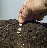 foto of rich soil  - Planting seeds in a row in the garden soil - JPG