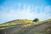 stock photo of lonely  - lone tree on mountain hills with blue sky - JPG