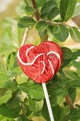 stock photo of valentine candy  - Candy valentines hearts on a green tree - JPG