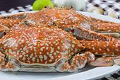 pic of cooked blue crab  - Close up of streamed blue crabs  - JPG