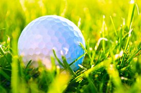 picture of grass  - Golf game - JPG