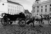 Постер, плакат: Vienna Street Attraction Horse Ride