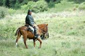 stock photo of gaucho  - the latin horseman  - JPG