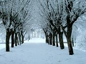 image of winter trees  - winter landscape - JPG