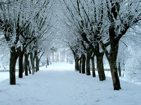 picture of winter trees  - winter landscape - JPG