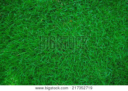 poster of Green top view fresh grass in botany garden