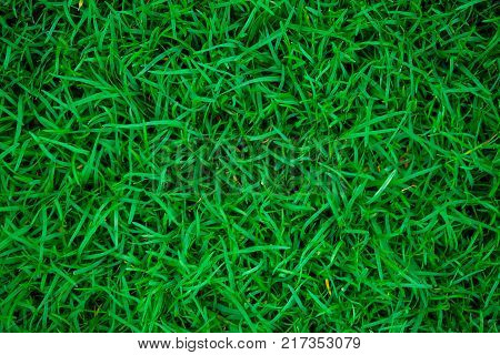 poster of Green fresh grass in botany garden top view