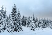 Christmas Winter Wonderland In The Mountains With Snow Covered Trees poster